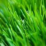ontario lawn care tips